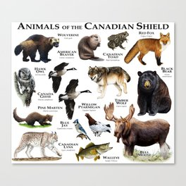 Animals of the Canadian Shield Canvas Print