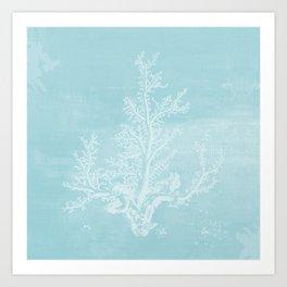 White Coral on Pale Blue Art Print
