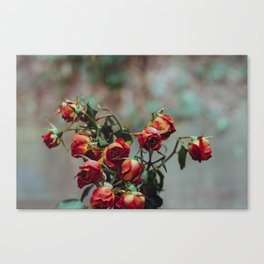 Windowsill Roses no. 1 Canvas Print