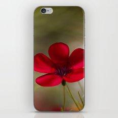 Linum iPhone & iPod Skin