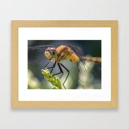 Dragonfly Closeup Framed Art Print