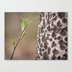 old and young Canvas Print