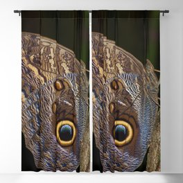 Owl butterfly in Costa Rica - Tropical moth Blackout Curtain