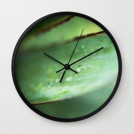 Dew Drops on Agave Leaf Wall Clock