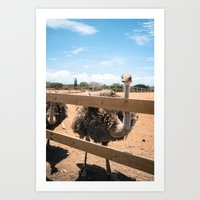 Ostrich pt 2 Art Print
