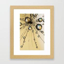 Single Dandy Seed Web Drops Framed Art Print