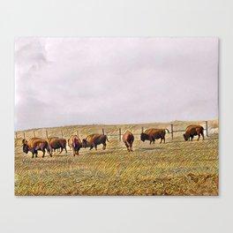 Montana Buffalo Range Canvas Print