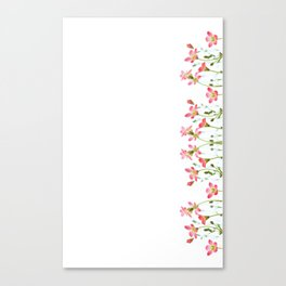 Saxifrage Flowers Canvas Print