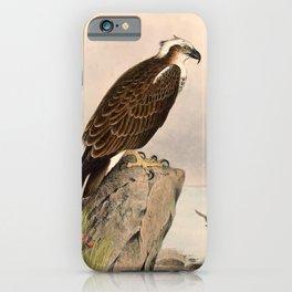 Vintage Print - The Birds of Australia (1910) - Eastern Osprey iPhone Case