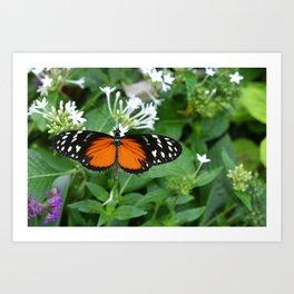 Orange and Black Butterfly Art Print