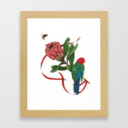 Bumblebee, Protea Flower and King Parrot Framed Art Print