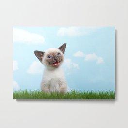 Siamese kitten singing Metal Print