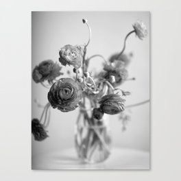 Ranunculus, black & white Canvas Print