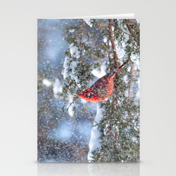 Let It Snow (Northern Cardinal) Stationery Cards