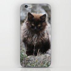 Fluffy Kitten iPhone & iPod Skin