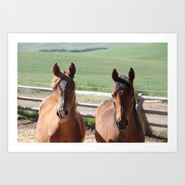 Horse Friends Photography Print Art Print