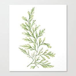 Fern Leaf Watercolor Painting Canvas Print