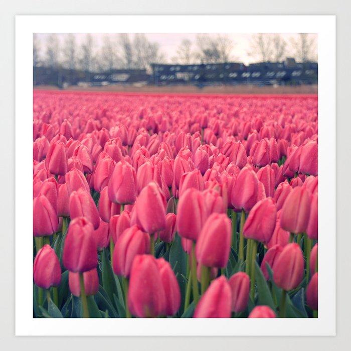 Tulips Field #5 Art Print