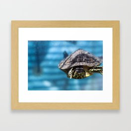 Mr. Chompers the Turtle Framed Art Print