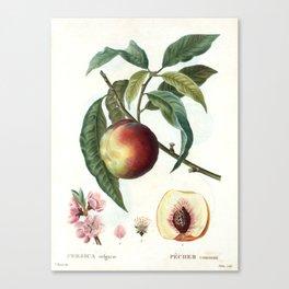 Peach on a branch Canvas Print