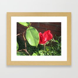 a rose Framed Art Print