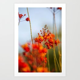 Red Bird of Paradise Art Print