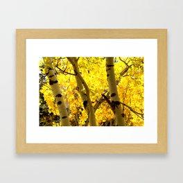 Glowing Aspen Trees Framed Art Print