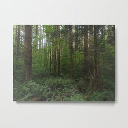 Undergrowth in the Fraser Valley Rainforest Metal Print