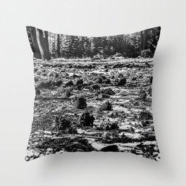Light Splattered Pinecones 2 Throw Pillow