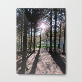 Pine Trees and Low Scottish Morning Sunshine Metal Print