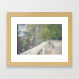 Coquette fence Framed Art Print