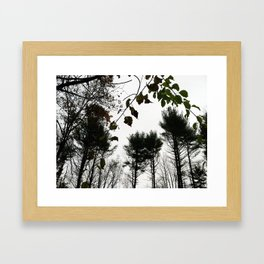 Autumn 11 Framed Art Print