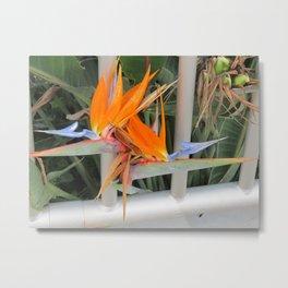 Hawaii Pearl Harbor Bird of Paradise Metal Print