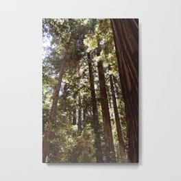 Redwood Forest XII Metal Print