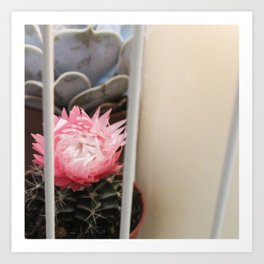 Cactus with Pink Flower in Birdcage Art Print