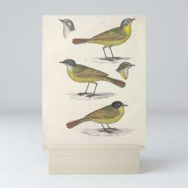 Yellow Wagtail motacilla cinereo capilla Sardinian Warbler3 Mini Art Print