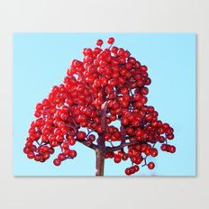 Rowan Berry Branch Top is Red on  Blue Nature Canvas Print