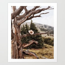 Bristlecone Cowboy Art Print