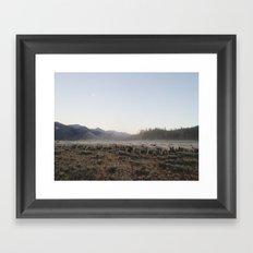 Sheep Dust Framed Art Print