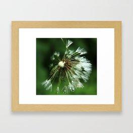 Puffball Framed Art Print