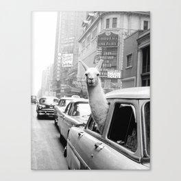 New York Llama Canvas Print