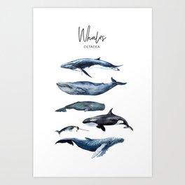 Watercolor Whales, Cetaceans, Whale Cetacea Art Print