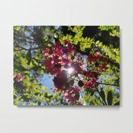 Indigenous Florida Flower Metal Print