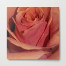 Cayenne Rose Metal Print
