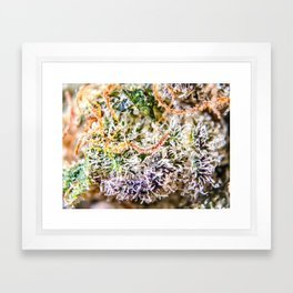 Diamond OG Indoor Hydroponic Close Up View Buds Trichomes Framed Art Print