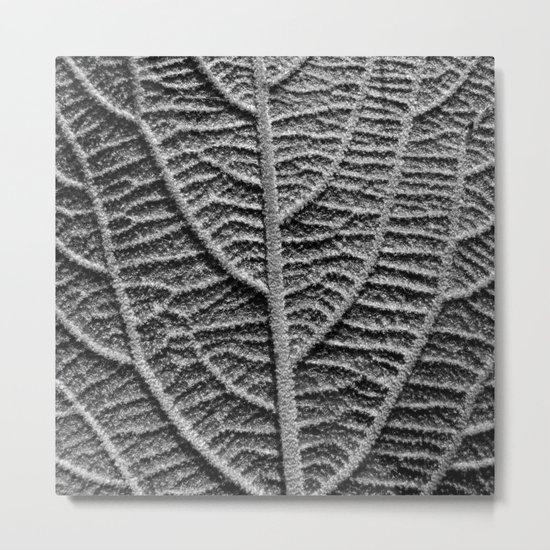 leaf vein macro II Metal Print
