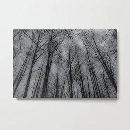 Naked trees - Black and white Metal Print