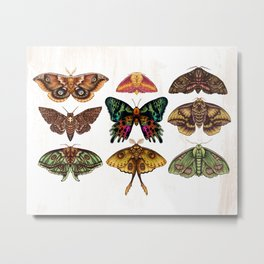 Moth Wings III Metal Print