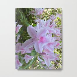 Hello Spring Flowers Metal Print
