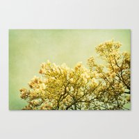 poem Canvas Prints featuring magnolia poem by Iris Lehnhardt - Photography